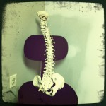 Chiropractic spine for License